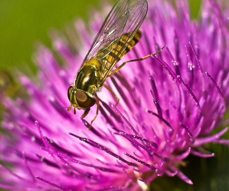 Ein Insekt in Makro